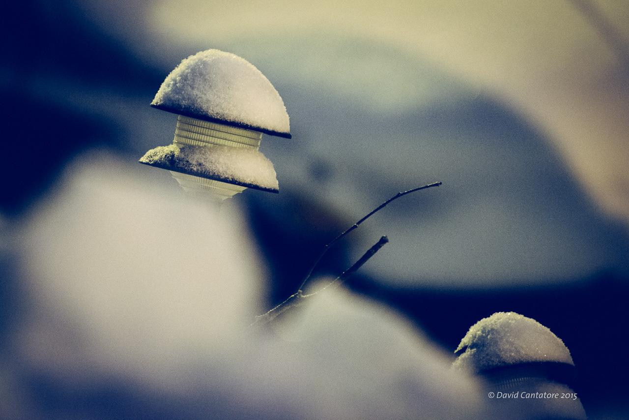 Electric Mushrooms