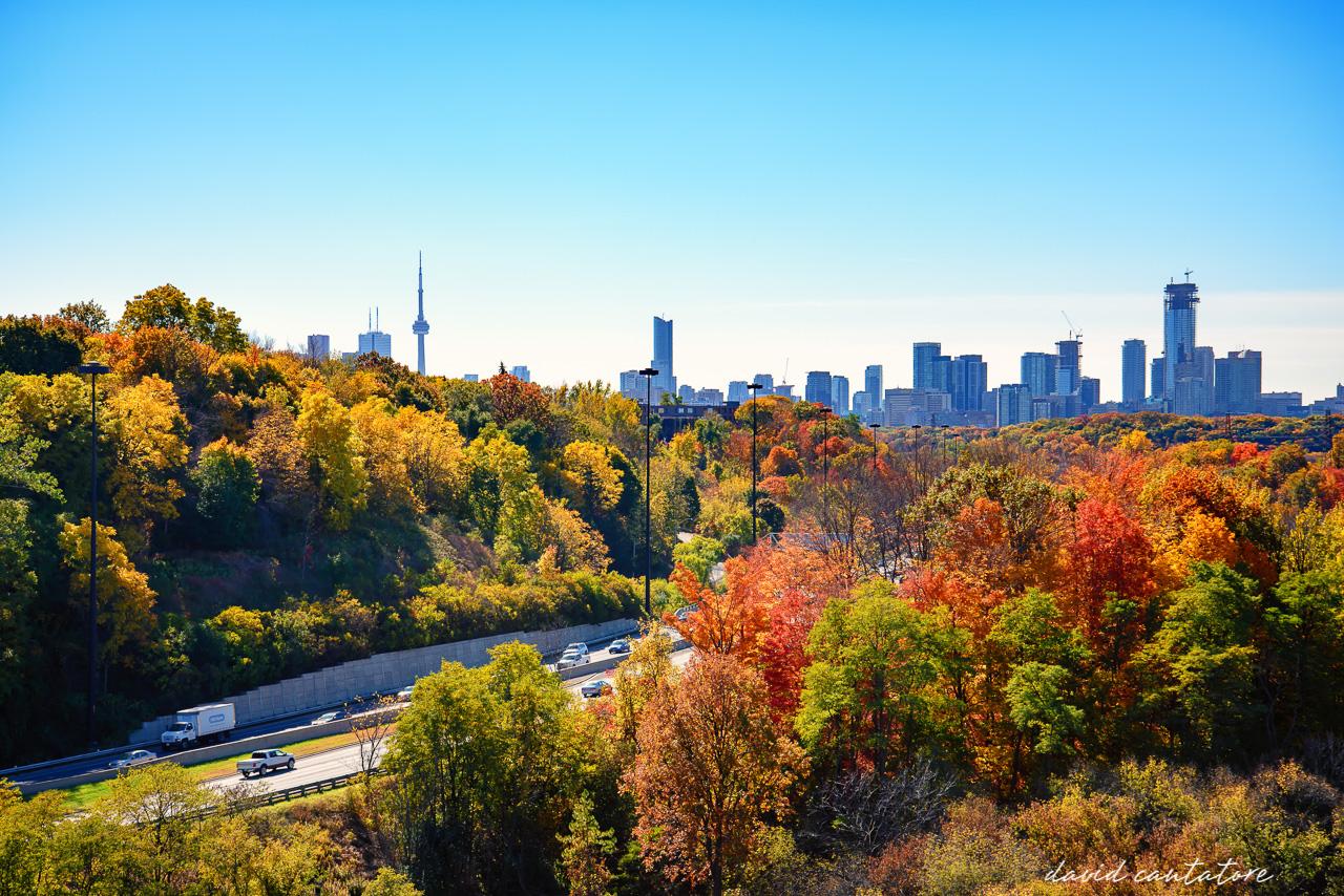 Colourful Fall